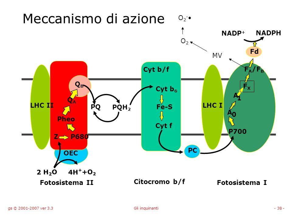 gs © 2001-2007 ver 3.3Gli inquinanti- 38 - Meccanismo di azione PC LHC II Cyt b/f OEC 2 H 2 O 4H + +O 2 Z Pheo QAQA PQ PQH 2 Cyt b 6 Fe-S Cyt f A 0 A