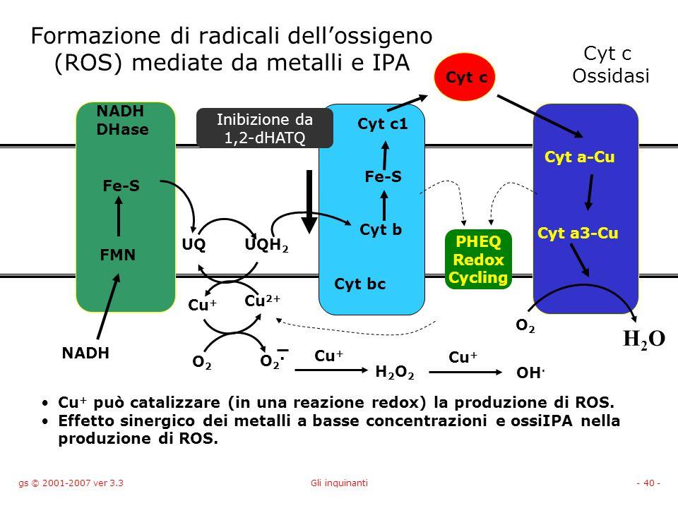gs © 2001-2007 ver 3.3Gli inquinanti- 40 - Formazione di radicali dellossigeno (ROS) mediate da metalli e IPA NADH DHase Cyt c Ossidasi Cyt bc NADH UQ