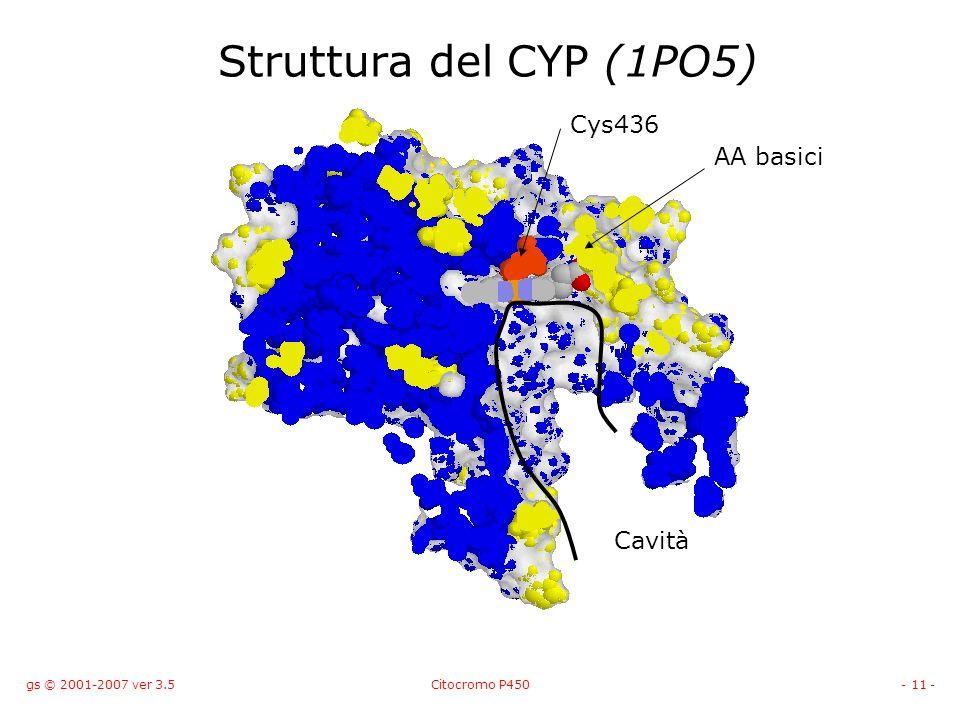 gs © 2001-2007 ver 3.5Citocromo P450- 11 - Struttura del CYP (1PO5) AA basici Cys436 Cavità