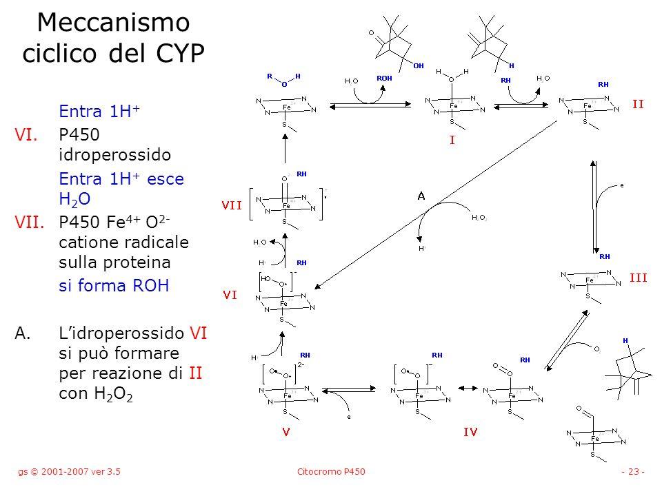gs © 2001-2007 ver 3.5Citocromo P450- 23 - Meccanismo ciclico del CYP Entra 1H + VI.P450 idroperossido Entra 1H + esce H 2 O VII.P450 Fe 4+ O 2- catio