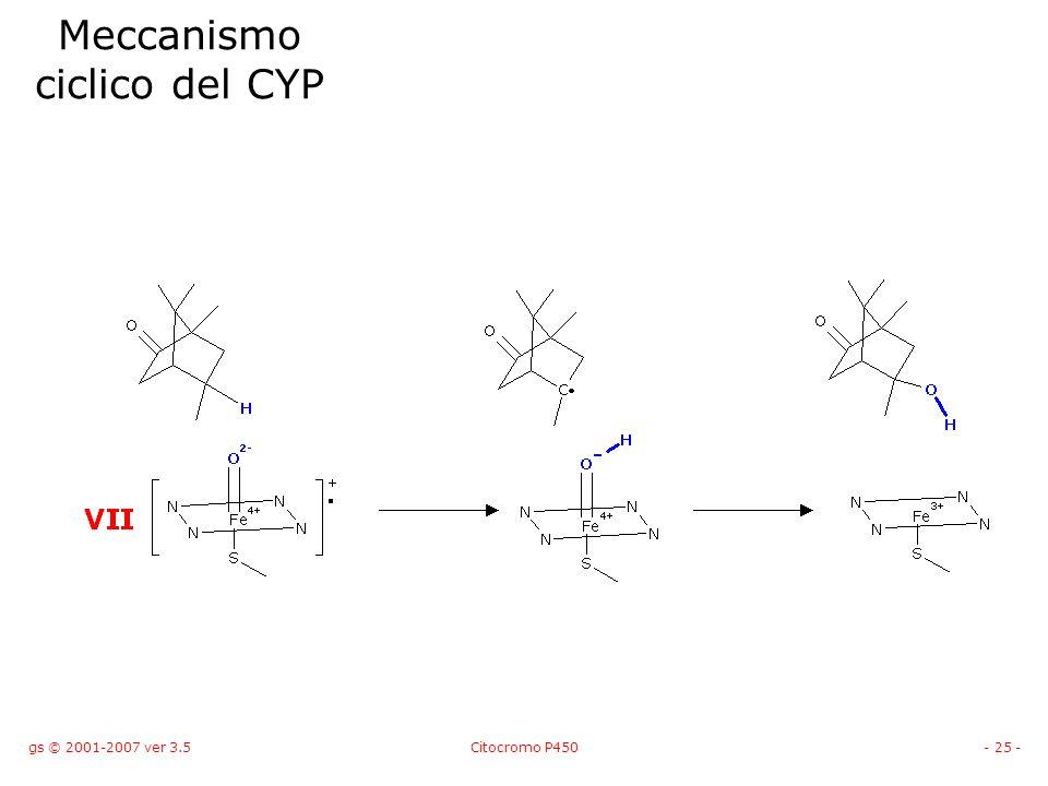 gs © 2001-2007 ver 3.5Citocromo P450- 25 - Meccanismo ciclico del CYP