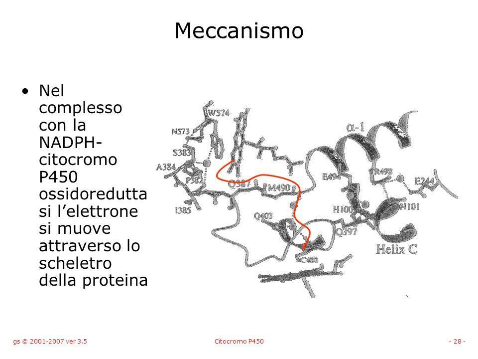 gs © 2001-2007 ver 3.5Citocromo P450- 28 - Meccanismo Nel complesso con la NADPH- citocromo P450 ossidoredutta si lelettrone si muove attraverso lo sc