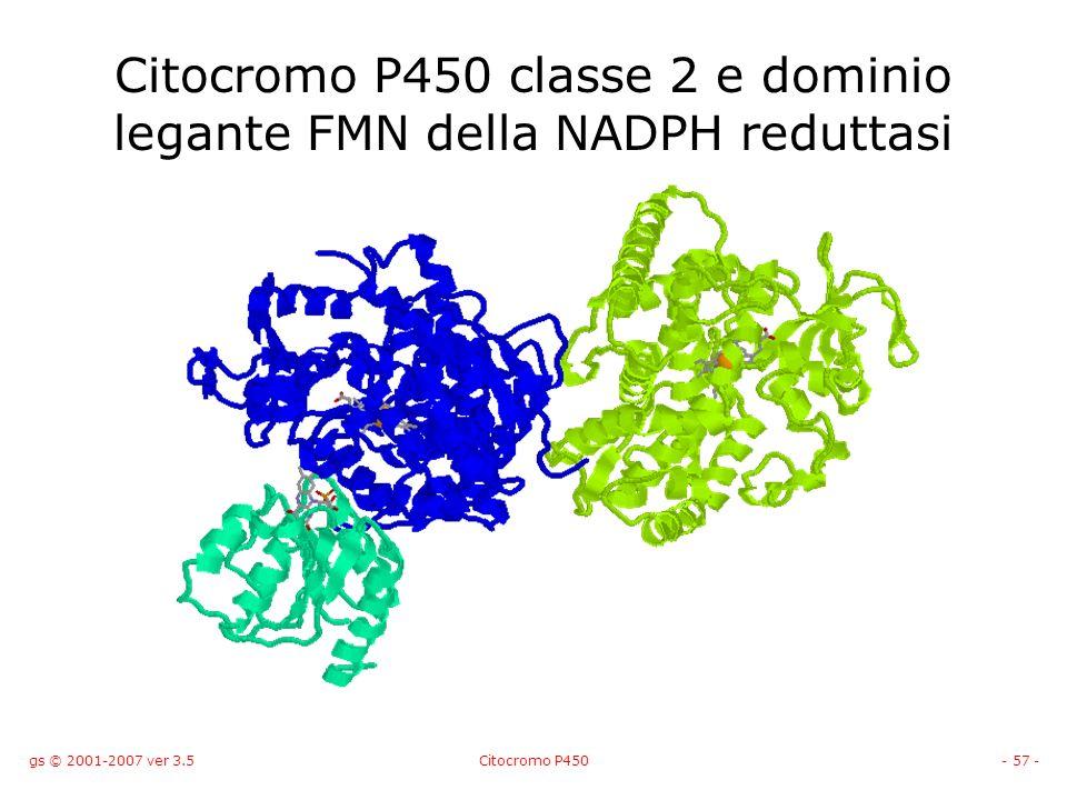 gs © 2001-2007 ver 3.5Citocromo P450- 57 - Citocromo P450 classe 2 e dominio legante FMN della NADPH reduttasi