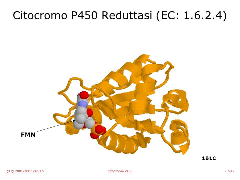 gs © 2001-2007 ver 3.5Citocromo P450- 58 - Citocromo P450 Reduttasi (EC: 1.6.2.4) FMN 1B1C