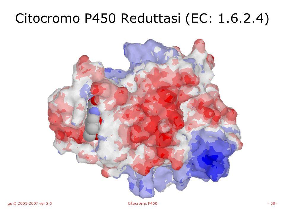 gs © 2001-2007 ver 3.5Citocromo P450- 59 - Citocromo P450 Reduttasi (EC: 1.6.2.4)