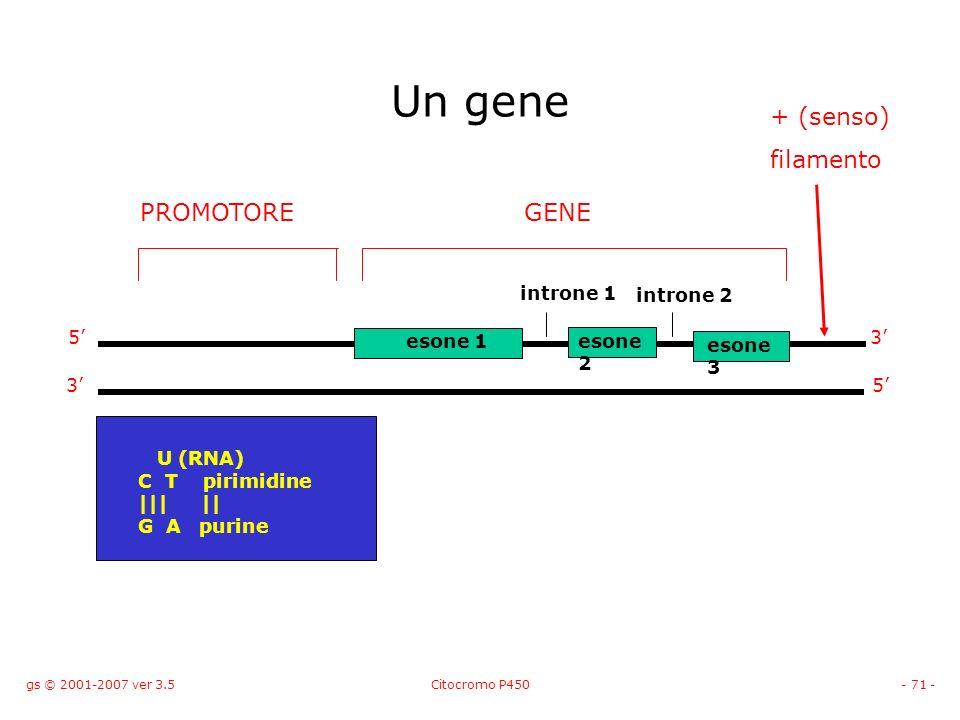 gs © 2001-2007 ver 3.5Citocromo P450- 71 - Un gene PROMOTORE esone 1esone 2 esone 3 introne 1 introne 2 GENE 5 5 3 3 + (senso) filamento U (RNA) C T p