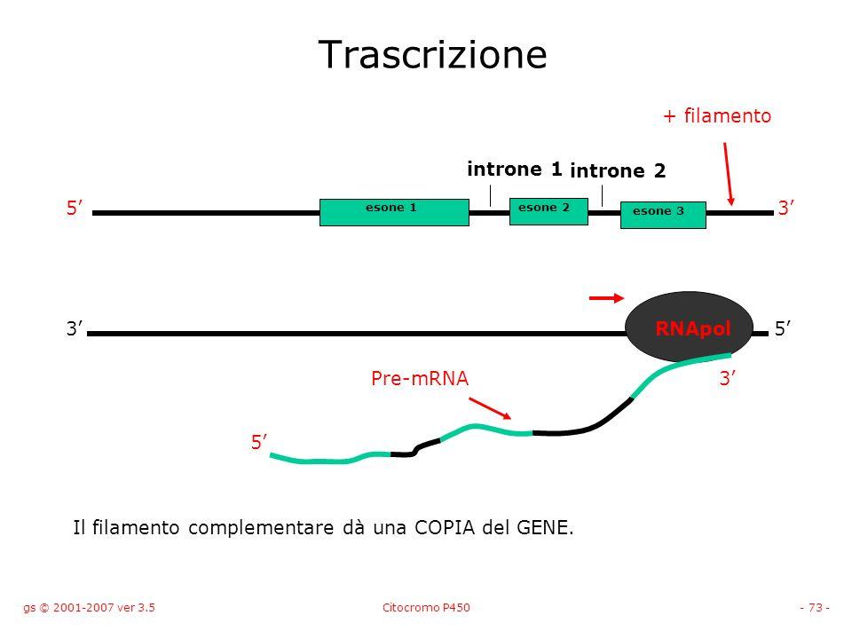 gs © 2001-2007 ver 3.5Citocromo P450- 73 - Trascrizione 53 + filamento RNApol 5 Pre-mRNA3 Il filamento complementare dà una COPIA del GENE. esone 1eso