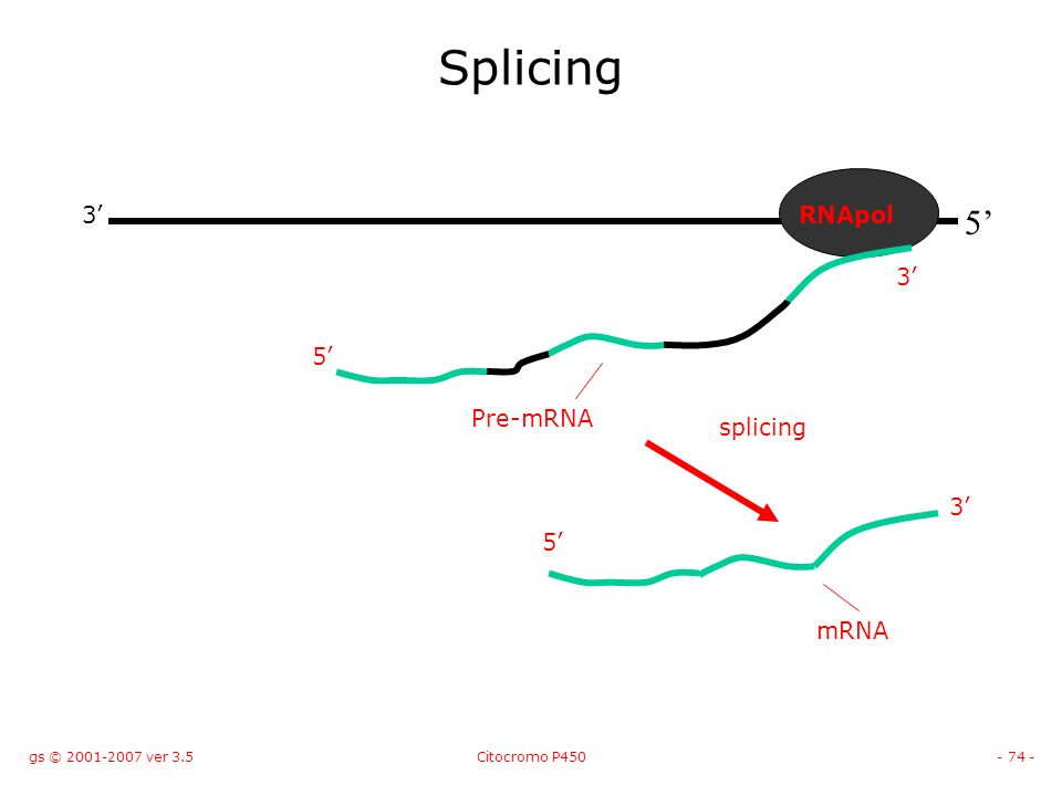 gs © 2001-2007 ver 3.5Citocromo P450- 74 - Splicing 5 3RNApol 5 Pre-mRNA 3 5 splicing 3 mRNA