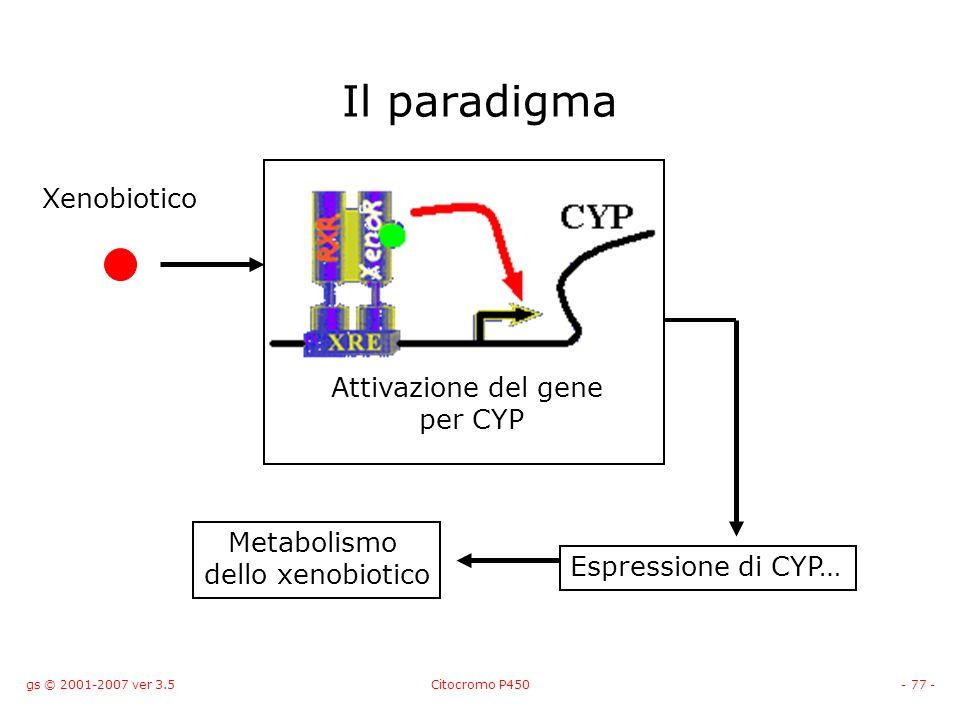 gs © 2001-2007 ver 3.5Citocromo P450- 77 - Il paradigma Xenobiotico Attivazione del gene per CYP Espressione di CYP… Metabolismo dello xenobiotico