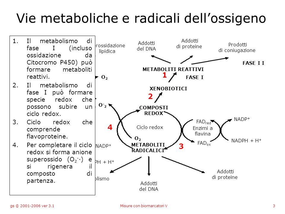 gs © 2001-2006 ver 3.1Misure con biomarcatori V4 Vie metaboliche e radicali dellossigeno Rottura del DNA Inattivazione enzimi Perossidazione lipidica Addotti del DNA Addotti di proteine Prodotti di coniugazione METABOLITI REATTIVI XENOBIOTICI Ciclo redox METABOLITI RADICALICI COMPOSTI REDOX O2O2 O-2O-2 O2O2 GSH GSSG GR NADPH + H + NADP + GPX H2O2H2O2 H2OH2O H 2 O + O 2 HO· O2O2 Fe NADPH + H + NADP + FAD ox FAD red Enzimi a flavina FASE I FASE I I Addotti del DNA Addotti di proteine Metabolismo 1 2 3 4 5 6 7 8 9 5.In presenza di ferro lanione superossido forma il radicale idrossido (Haber-Weiss).