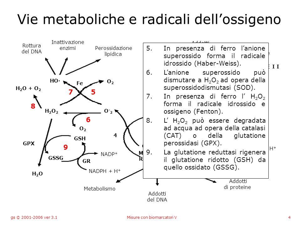 gs © 2001-2006 ver 3.1Misure con biomarcatori V105 Glutatione-S-transferasi microsomiale e citosolica Almeno quattro classi di glutatione-S- transferasi (), diversi isoenzimi inducibili.