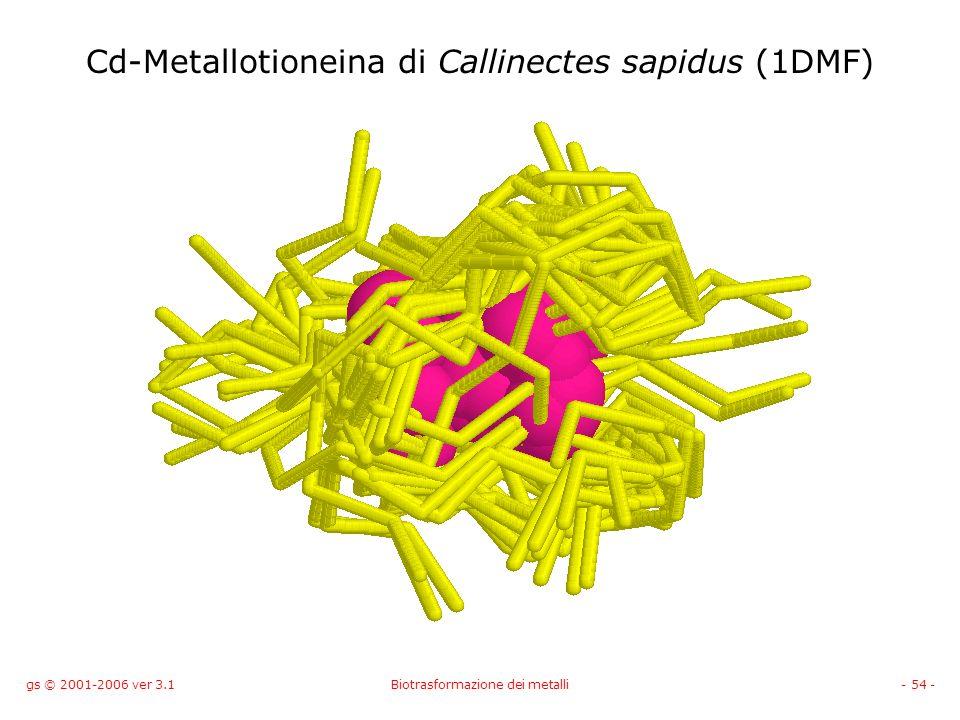 gs © 2001-2006 ver 3.1Biotrasformazione dei metalli- 54 - Cd-Metallotioneina di Callinectes sapidus (1DMF)