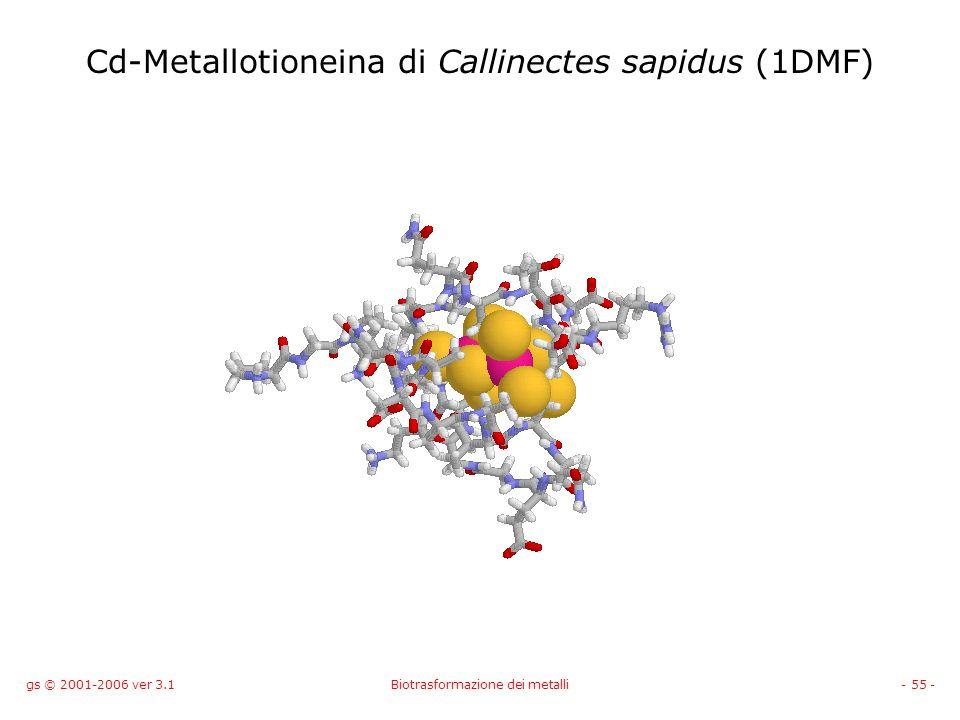 gs © 2001-2006 ver 3.1Biotrasformazione dei metalli- 55 - Cd-Metallotioneina di Callinectes sapidus (1DMF)