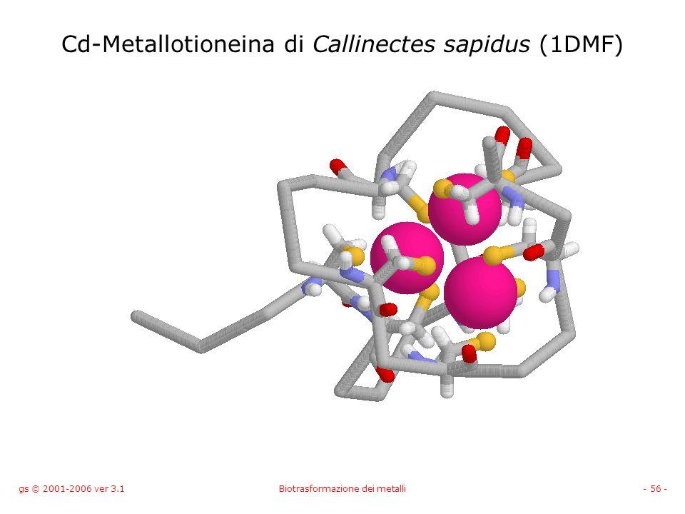 gs © 2001-2006 ver 3.1Biotrasformazione dei metalli- 56 - Cd-Metallotioneina di Callinectes sapidus (1DMF)