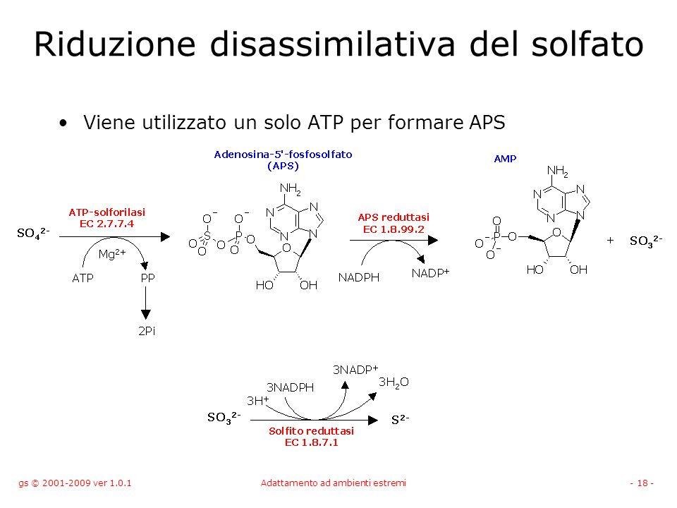 gs © 2001-2009 ver 1.0.1Adattamento ad ambienti estremi- 18 - Riduzione disassimilativa del solfato Viene utilizzato un solo ATP per formare APS