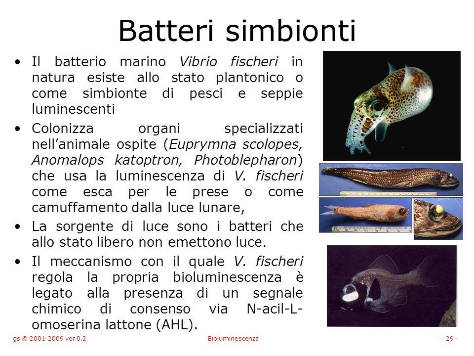 gs © 2001-2009 ver 0.2Bioluminescenza- 29 - Batteri simbionti Il batterio marino Vibrio fischeri in natura esiste allo stato plantonico o come simbionte di pesci e seppie luminescenti Colonizza organi specializzati nellanimale ospite (Euprymna scolopes, Anomalops katoptron, Photoblepharon) che usa la luminescenza di V.