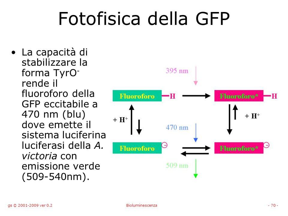 gs © 2001-2009 ver 0.2Bioluminescenza- 70 - Fotofisica della GFP La capacità di stabilizzare la forma TyrO - rende il fluoroforo della GFP eccitabile a 470 nm (blu) dove emette il sistema luciferina luciferasi della A.