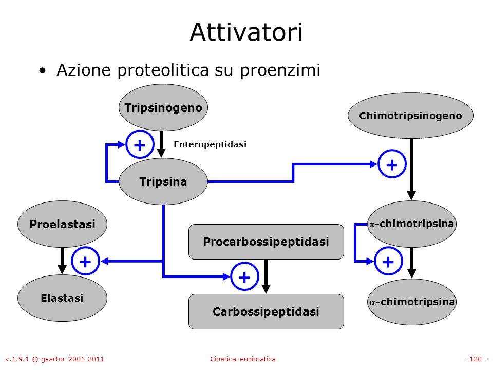 v.1.9.1 © gsartor 2001-2011Cinetica enzimatica- 120 - Attivatori Azione proteolitica su proenzimi Tripsinogeno Tripsina + Proelastasi Elastasi + Chimo