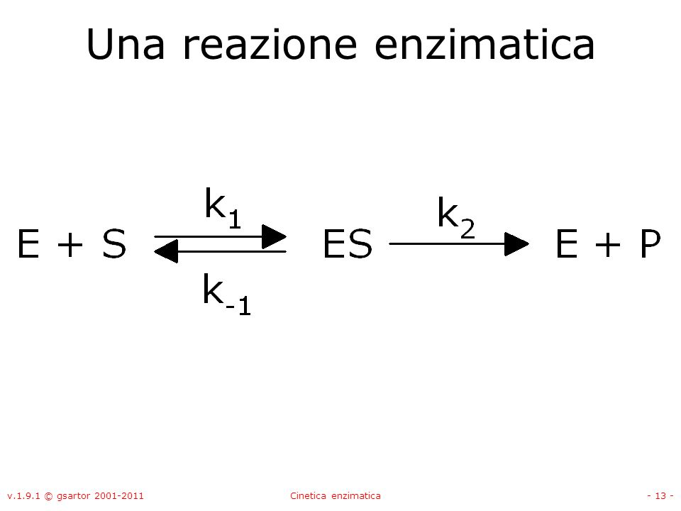 v.1.9.1 © gsartor 2001-2011Cinetica enzimatica- 13 - Una reazione enzimatica
