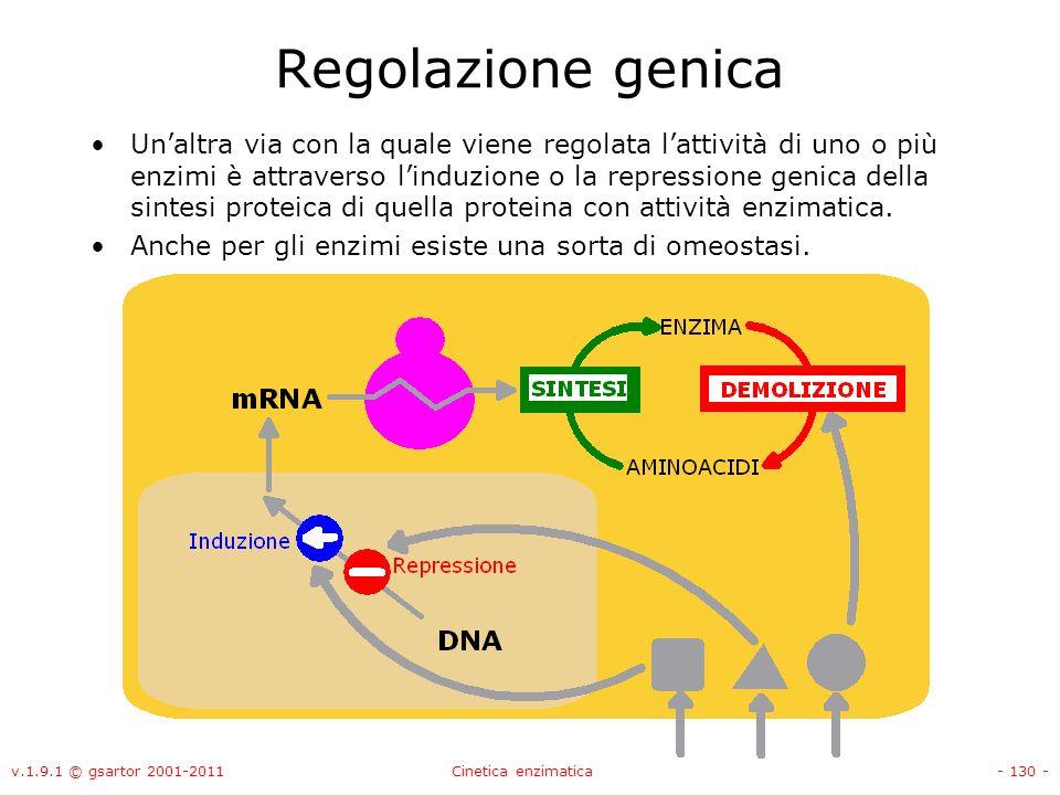 v.1.9.1 © gsartor 2001-2011Cinetica enzimatica- 130 - Regolazione genica Unaltra via con la quale viene regolata lattività di uno o più enzimi è attra