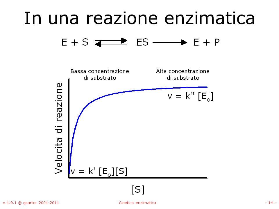 v.1.9.1 © gsartor 2001-2011Cinetica enzimatica- 14 - In una reazione enzimatica