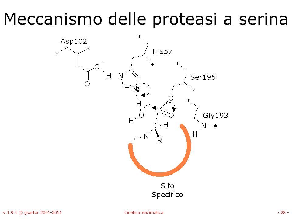 v.1.9.1 © gsartor 2001-2011Cinetica enzimatica- 28 - Meccanismo delle proteasi a serina