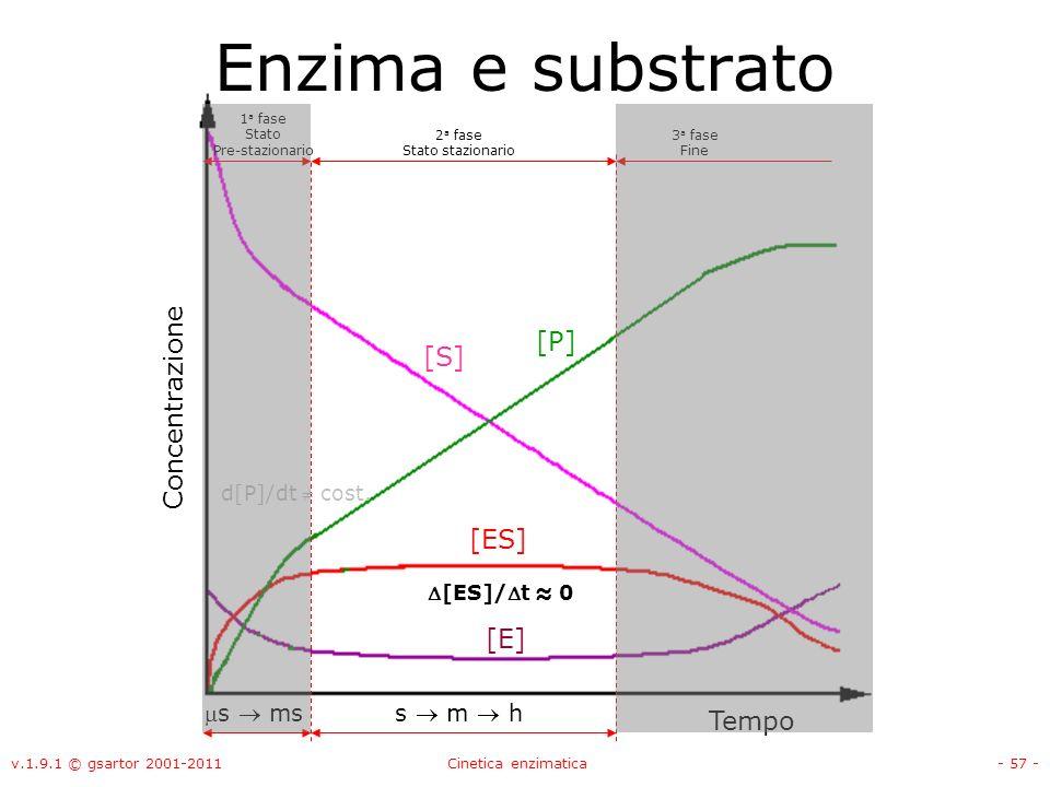 v.1.9.1 © gsartor 2001-2011Cinetica enzimatica- 57 - 1 a fase Stato Pre-stazionario 2 a fase Stato stazionario Enzima e substrato 3 a fase Fine d[P]/d