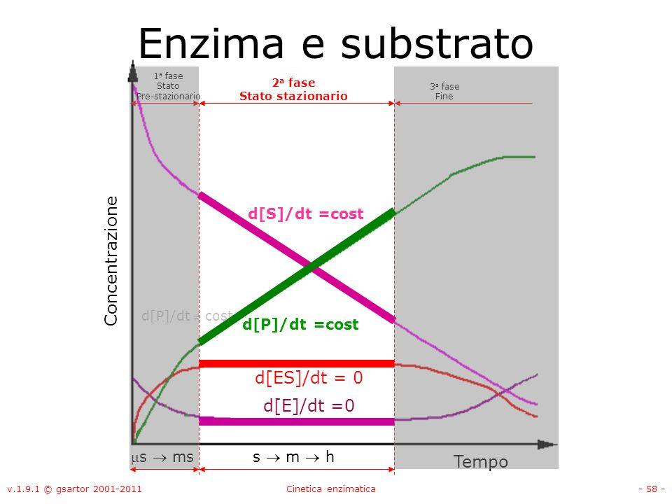 v.1.9.1 © gsartor 2001-2011Cinetica enzimatica- 58 - 1 a fase Stato Pre-stazionario 2 a fase Stato stazionario Enzima e substrato 3 a fase Fine d[P]/d