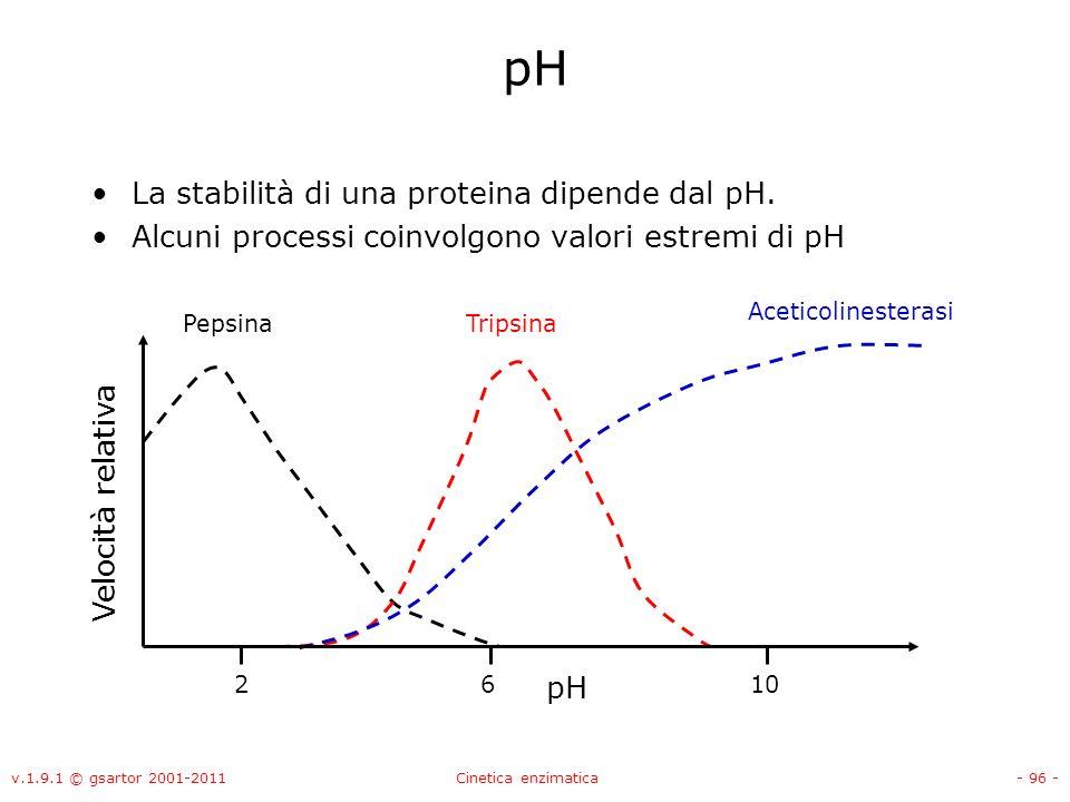 v.1.9.1 © gsartor 2001-2011Cinetica enzimatica- 96 - pH La stabilità di una proteina dipende dal pH. Alcuni processi coinvolgono valori estremi di pH