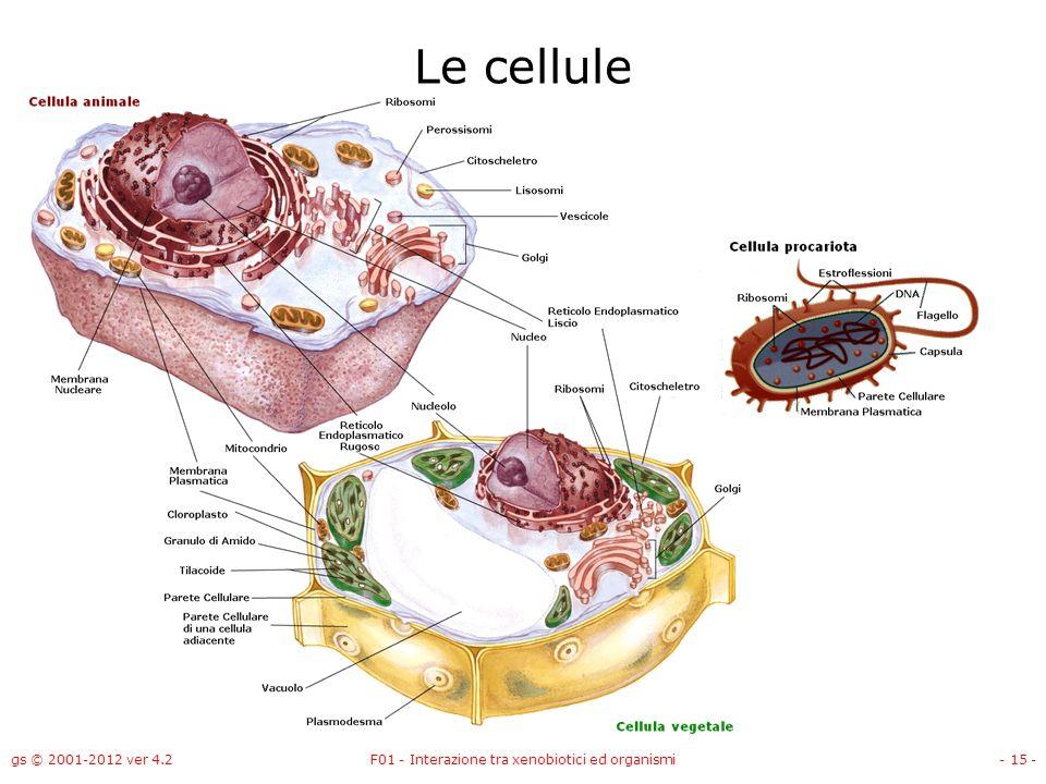 gs © 2001-2012 ver 4.2F01 - Interazione tra xenobiotici ed organismi- 15 - Le cellule