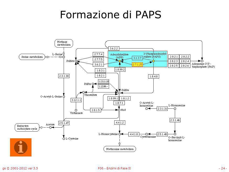 gs © 2001-2012 ver 3.5F06 - Enzimi di Fase II- 25 - Formazione di PAPS