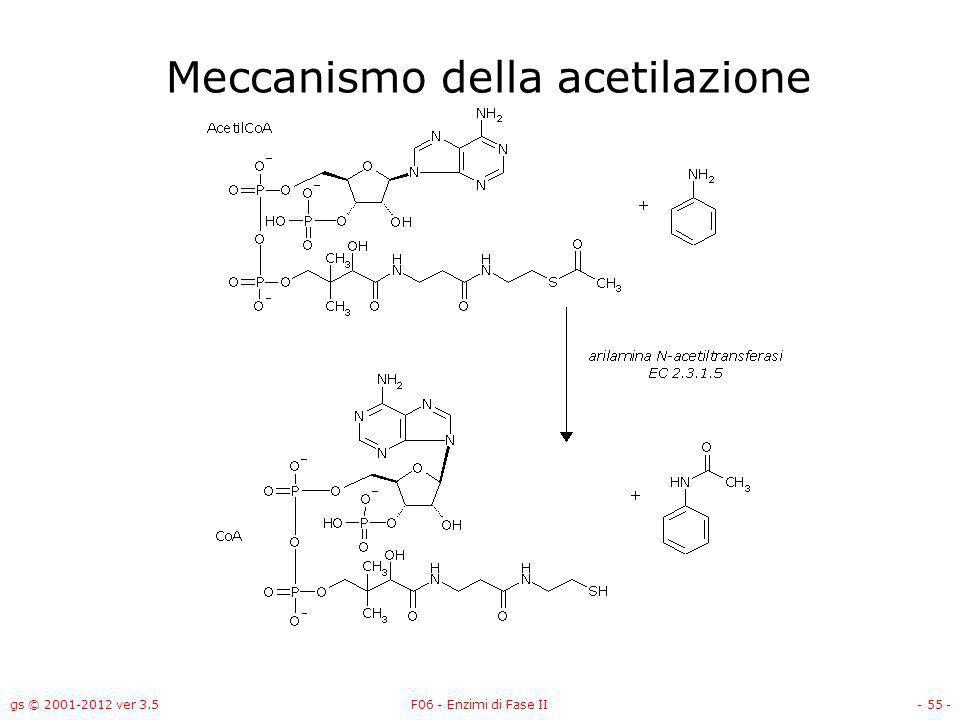 gs © 2001-2012 ver 3.5F06 - Enzimi di Fase II- 56 - Gli enzimi di fase II catalizzano reazioni di: Coniugazione con –Acido glucuronico –Glutatione –Solfato –Acetile –Aminoacidi Metilazione Metallotioneine