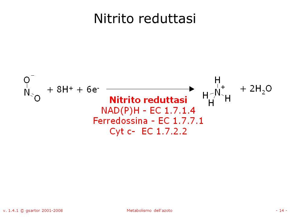 v. 1.4.1 © gsartor 2001-2008Metabolismo dell'azoto- 14 - Nitrito reduttasi