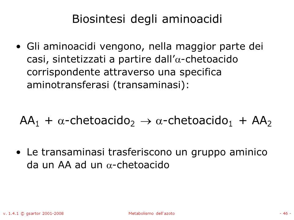 v. 1.4.1 © gsartor 2001-2008Metabolismo dell'azoto- 46 - Biosintesi degli aminoacidi Gli aminoacidi vengono, nella maggior parte dei casi, sintetizzat