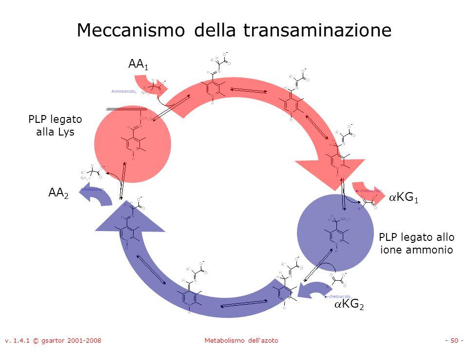 v. 1.4.1 © gsartor 2001-2008Metabolismo dell'azoto- 50 - Meccanismo della transaminazione PLP legato alla Lys PLP legato allo ione ammonio AA 1 KG 1 K