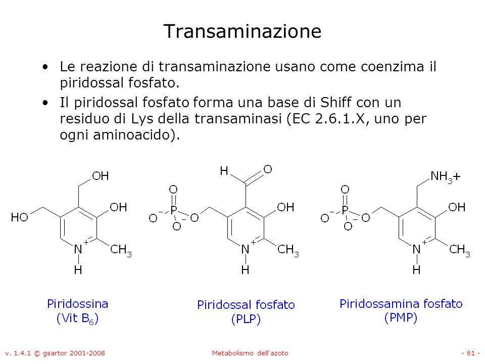 v. 1.4.1 © gsartor 2001-2008Metabolismo dell'azoto- 61 - Transaminazione Le reazione di transaminazione usano come coenzima il piridossal fosfato. Il