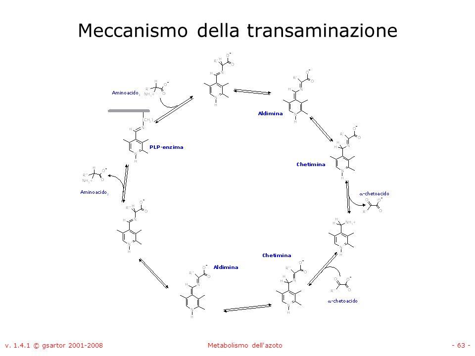 v. 1.4.1 © gsartor 2001-2008Metabolismo dell'azoto- 63 - Meccanismo della transaminazione