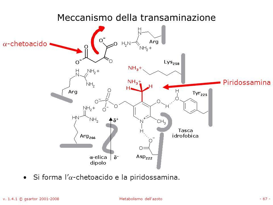 v. 1.4.1 © gsartor 2001-2008Metabolismo dell'azoto- 67 - Meccanismo della transaminazione Si forma l-chetoacido e la piridossamina. Piridossamina -che