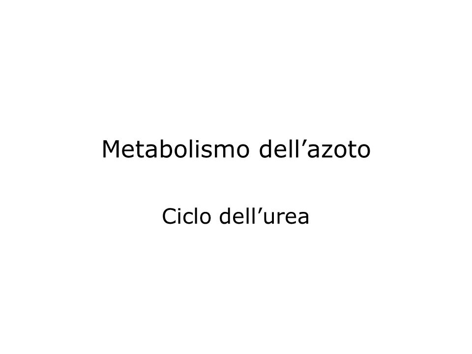 Metabolismo dellazoto Ciclo dellurea