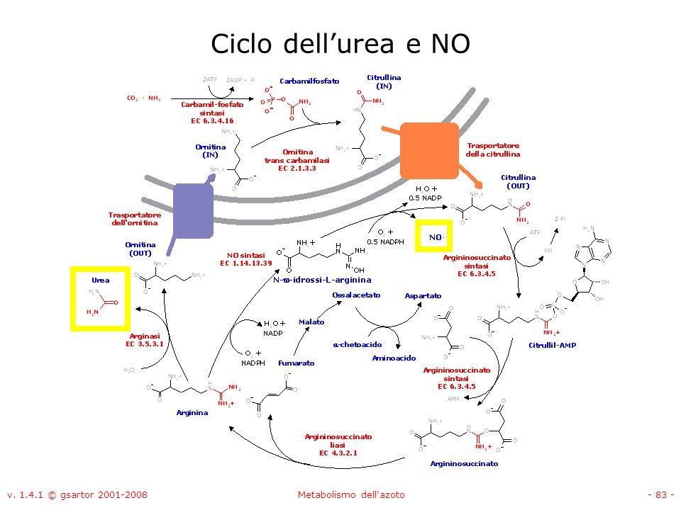 v. 1.4.1 © gsartor 2001-2008Metabolismo dell'azoto- 83 - Ciclo dellurea e NO