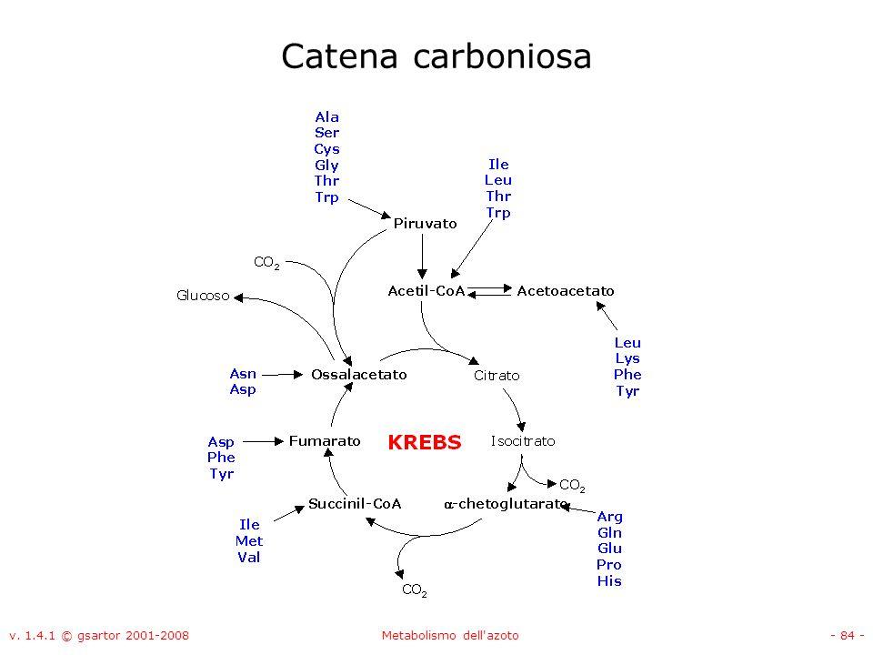 v. 1.4.1 © gsartor 2001-2008Metabolismo dell'azoto- 84 - Catena carboniosa