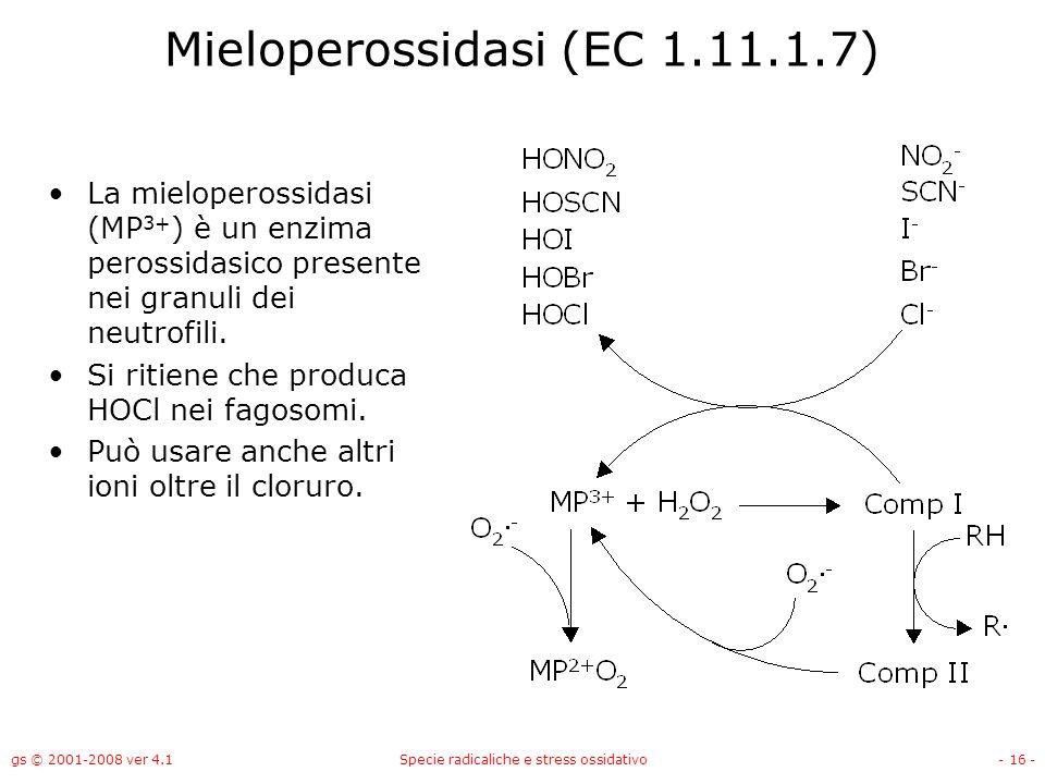 gs © 2001-2008 ver 4.1Specie radicaliche e stress ossidativo- 16 - Mieloperossidasi (EC 1.11.1.7) La mieloperossidasi (MP 3+ ) è un enzima perossidasi