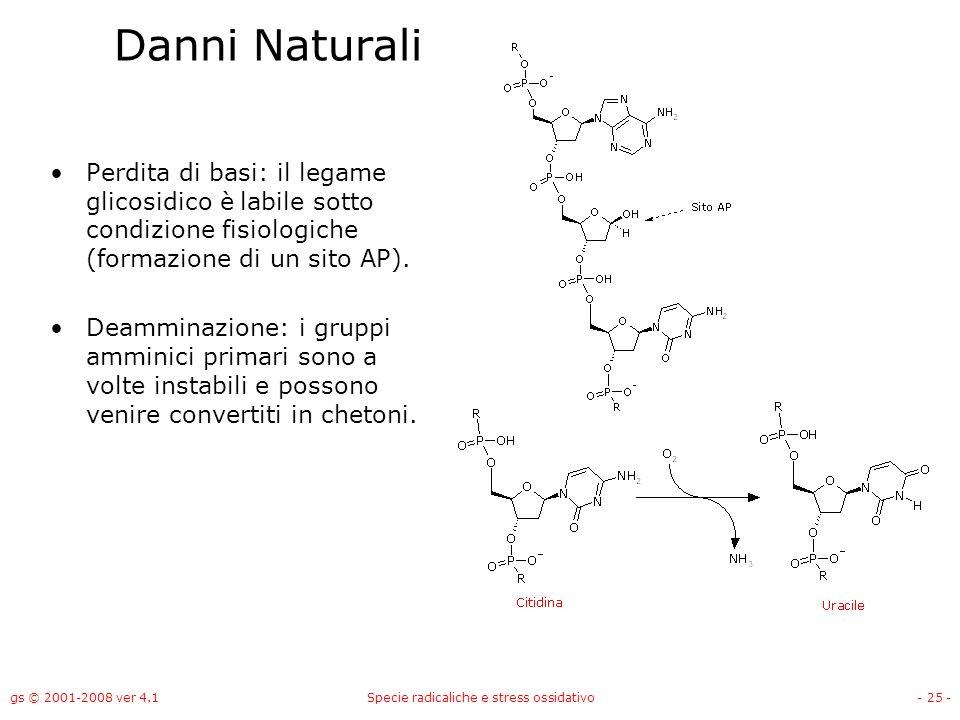 gs © 2001-2008 ver 4.1Specie radicaliche e stress ossidativo- 25 - Danni Naturali Perdita di basi: il legame glicosidico è labile sotto condizione fis