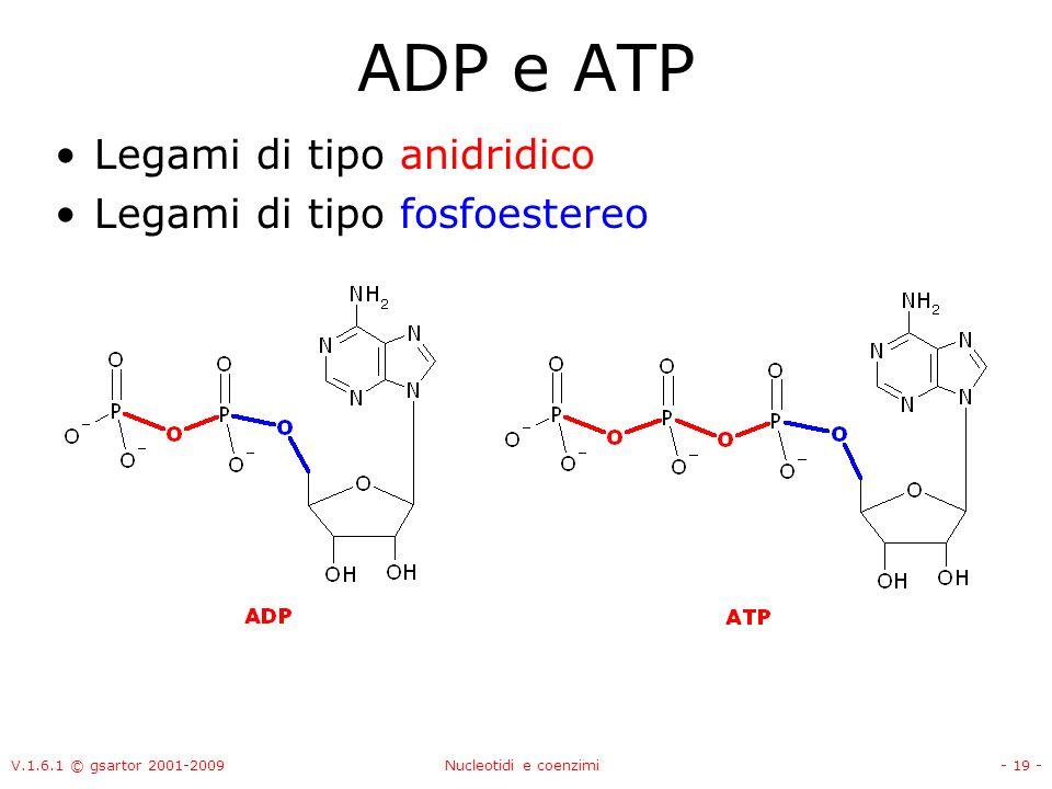 V.1.6.1 © gsartor 2001-2009Nucleotidi e coenzimi- 19 - ADP e ATP Legami di tipo anidridico Legami di tipo fosfoestereo