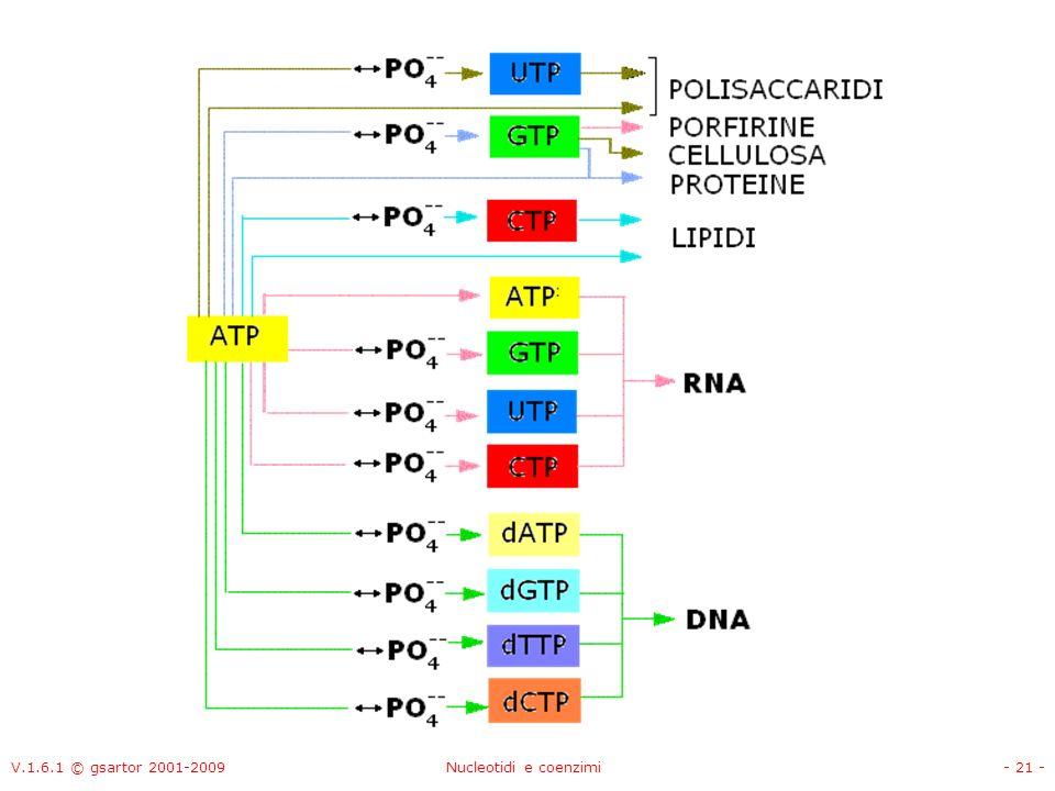 V.1.6.1 © gsartor 2001-2009Nucleotidi e coenzimi- 21 -