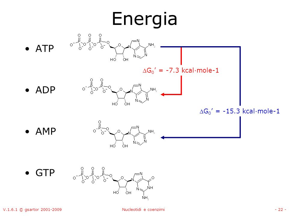 V.1.6.1 © gsartor 2001-2009Nucleotidi e coenzimi- 22 - Energia ATP ADP AMP GTP G 0 = -7.3 kcal·mole-1 G 0 = -15.3 kcal·mole-1