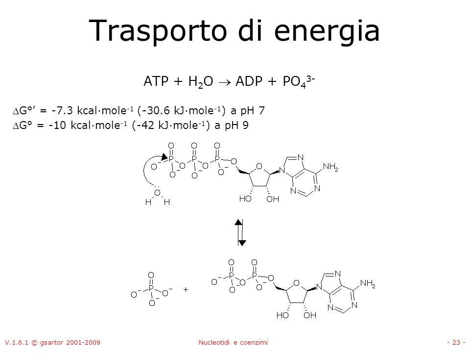 V.1.6.1 © gsartor 2001-2009Nucleotidi e coenzimi- 23 - Trasporto di energia ATP + H 2 O ADP + PO 4 3- G° = -7.3 kcal·mole -1 (-30.6 kJ·mole -1 ) a pH