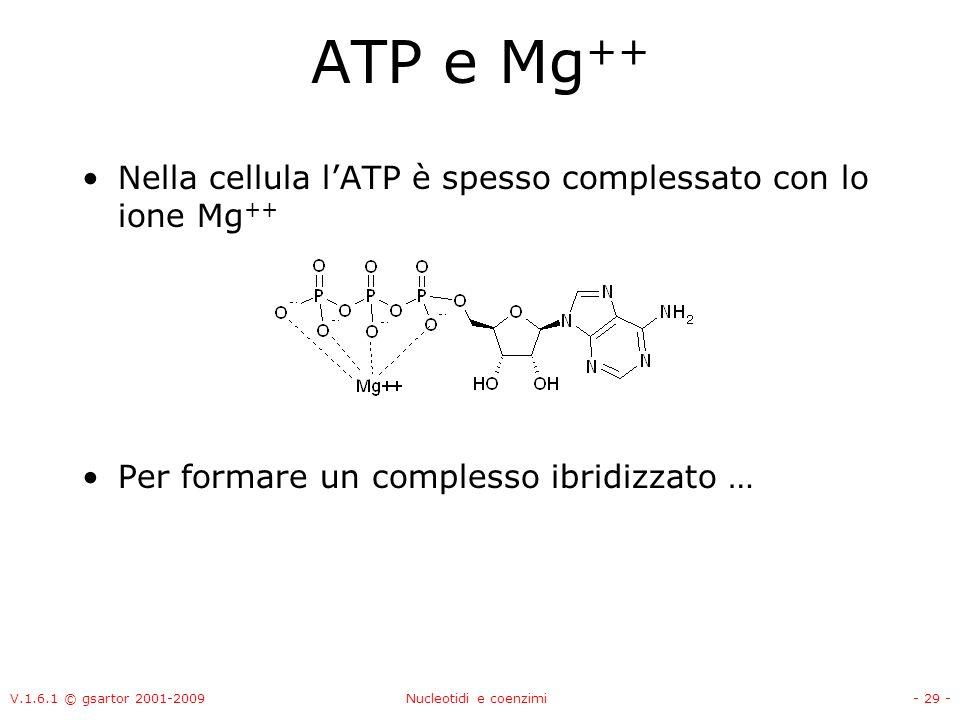 V.1.6.1 © gsartor 2001-2009Nucleotidi e coenzimi- 29 - ATP e Mg ++ Nella cellula lATP è spesso complessato con lo ione Mg ++ Per formare un complesso