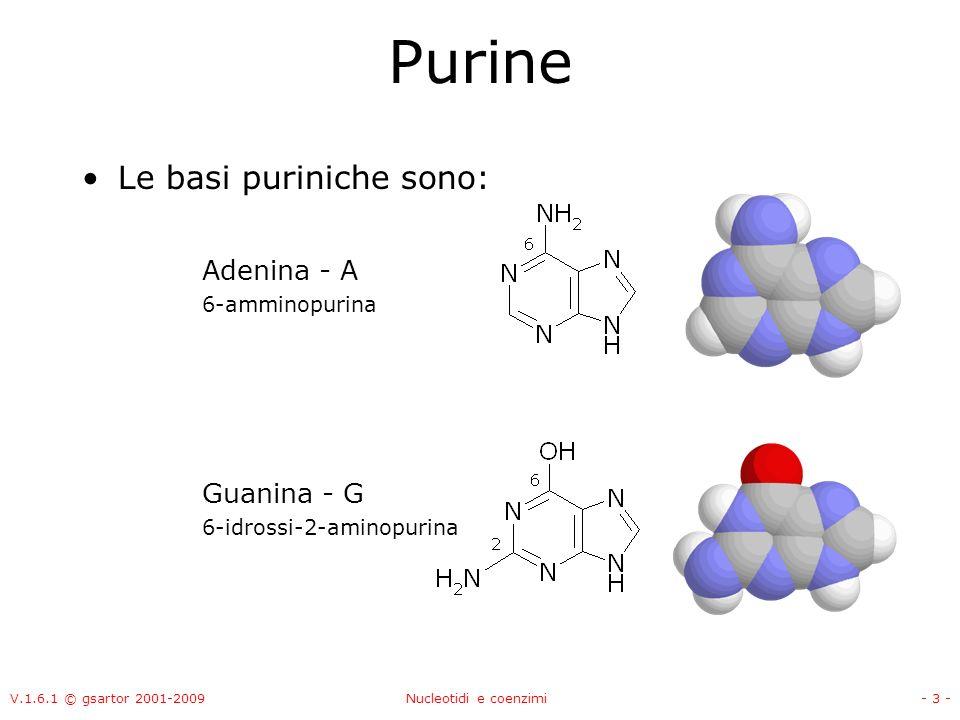 V.1.6.1 © gsartor 2001-2009Nucleotidi e coenzimi- 3 - Purine Le basi puriniche sono: Adenina - A 6-amminopurina Guanina - G 6-idrossi-2-aminopurina