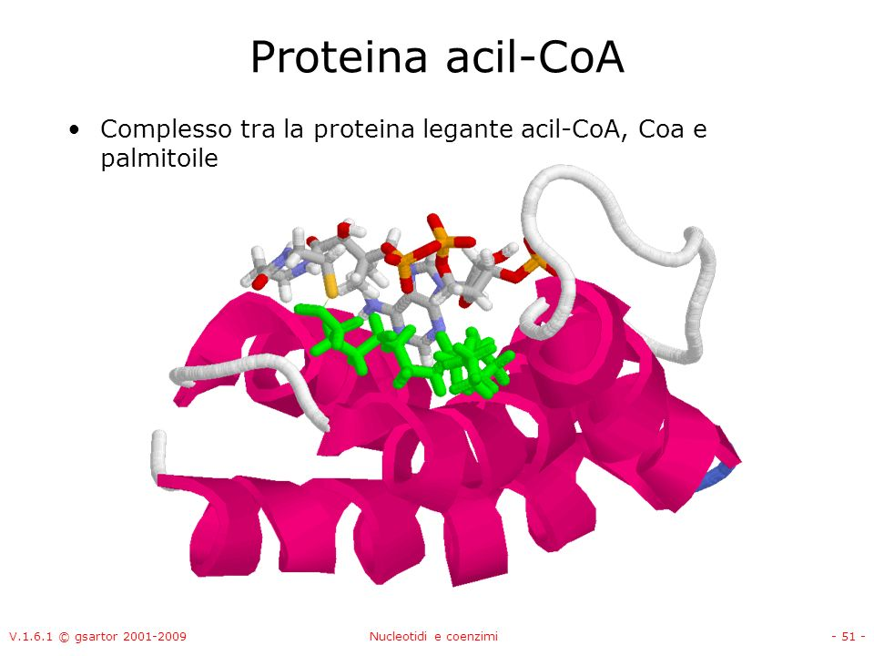 V.1.6.1 © gsartor 2001-2009Nucleotidi e coenzimi- 51 - Proteina acil-CoA Complesso tra la proteina legante acil-CoA, Coa e palmitoile